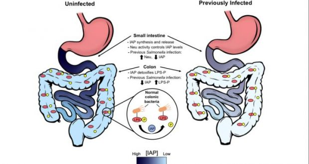 Gut Reaction Repeated Food Poisoning Triggers Chronic Disease